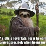 Thumb_sloth_gandalf